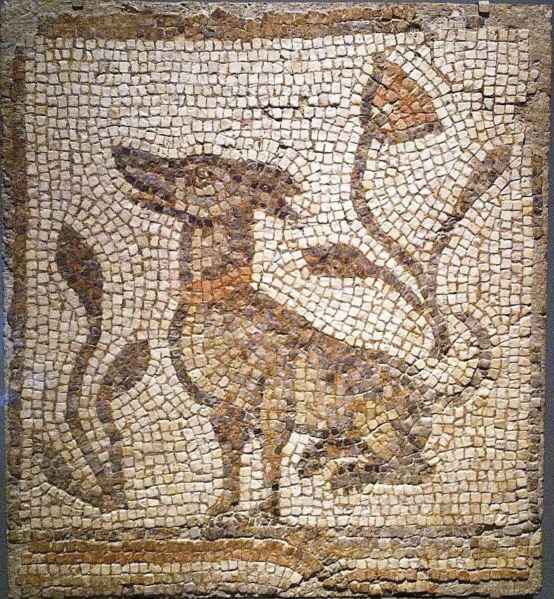 Pies na mozaice rzymskiej