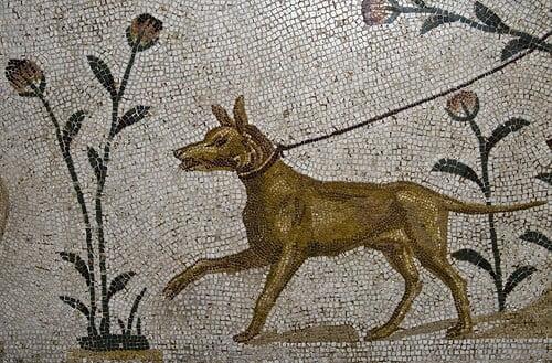 Psy na polu bitwy