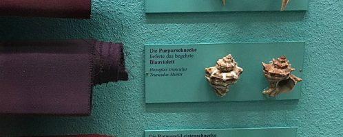 Odcienie purpury osiągnięte z różnych rodzajów ślimaków morskich