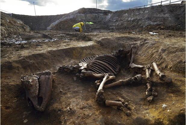 Odkryto nienaruszony szkielet konia z czasów Rzymian