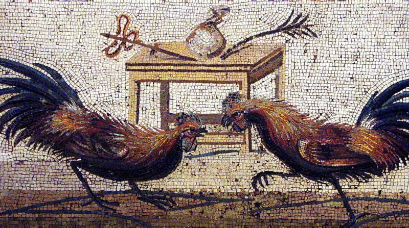 Fighting roosters on a Roman mosaic