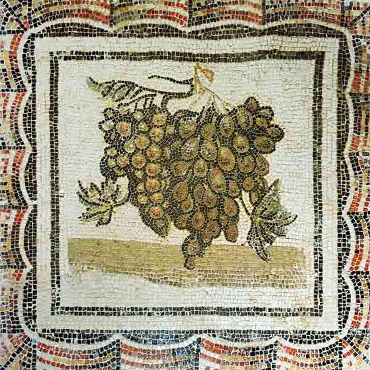 Winogrona rzymskie