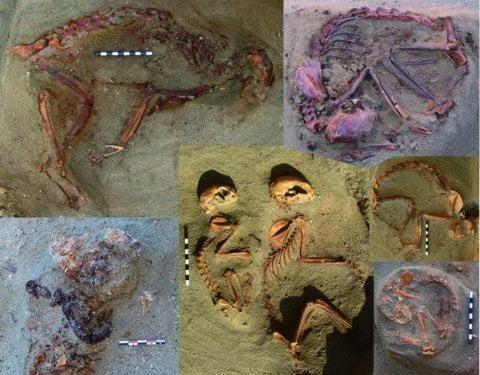 Odkryto ciało kota liczące około 2000 lat