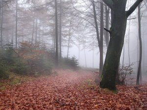 Teutoburg Forest in fog and rain