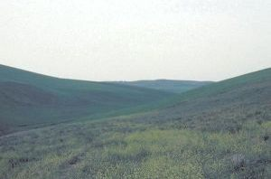 Battle of Cynoscephalae