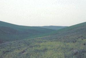 Pole bitwy pod Kynoskefalaj