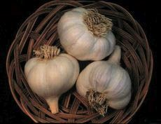 The ancient Romans greatly valued the health properties of garlic