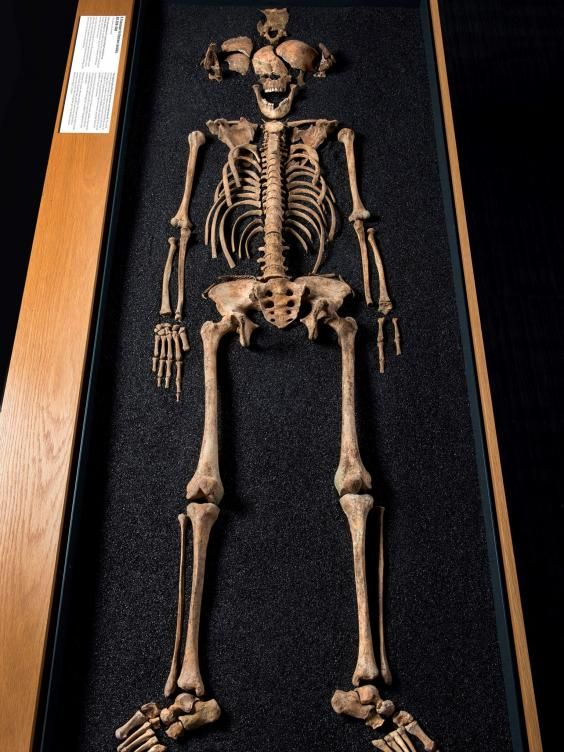 Jeden ze znalezionych szkieletów