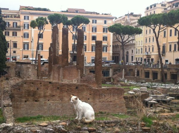 A cat shelter in the place where Caesar died