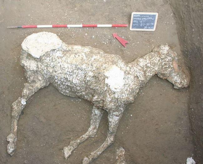 Odkryto pierwsze szczątki konia w Pompejach