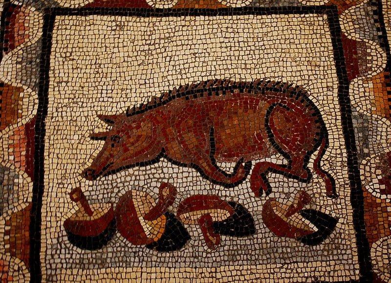 Świnia z truflami na mozaice rzymskiej. Obiekt znajduje się w Muzeach Watykańskich w Rzymie