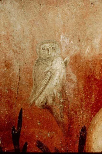Owl in garden