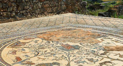 Piękna mozaika rzymska w Volubilis