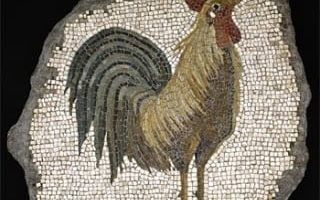 A rooster on the Roman mosaic