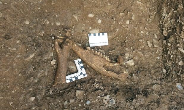 Pozostałości po zwierzętach, zabitych w rzeźni