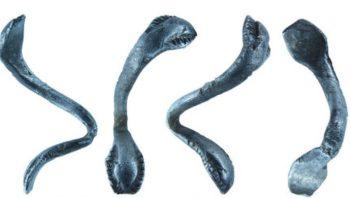 Rzymski pierścień z wężami uznany za skarb