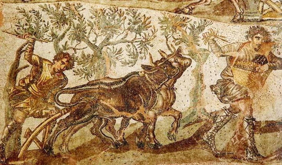 Rzymska mozaika ukazująca woły